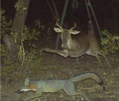 20 of the Craziest Trail Cam Photos of All Time | Crazy pictures ...