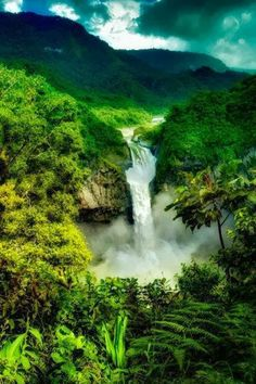 The Amazon Rain Forest Brazil.