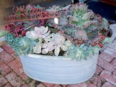 A Galvanized metal tub filled with succulents has a country look to it.