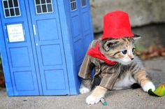The Eleventh Doctor, Doctor Who. | Tiny Kittens Dressed As Iconic Fantasy Characters Are The Best Tiny Kittens