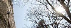 birgit roßmanith - bewegung in begegnung Trunks, Plants, Drift Wood, Tree Trunks, Plant, Planets