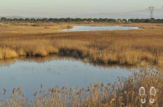 Gli specchi d'acqua dolce di Bottagone oasi #WWF #Orti-Bottagone #Piombino #maremma