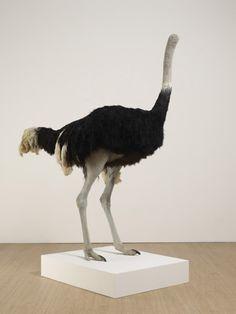 David Shrigley, Ostrich, 2009