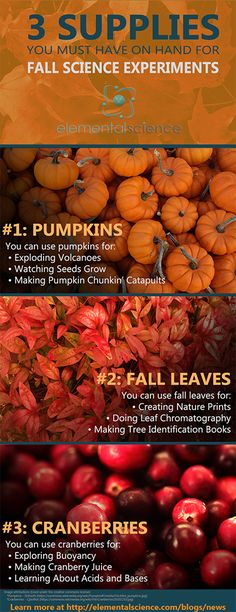 Check out these fall science experiment ideas using pumpkins, fall leaves, and cranberries!