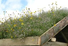 Roof for butterflies! Even wildflower fields are sold like carpets on roofs. If I ever get a dream house, that's my roof :)