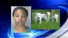New Jersey woman accused of suffocating puppies after fight with boyfriend/ October 17, 2013