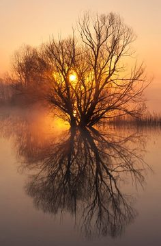 Sunrise in the Marsh --  by Anna Krizsanóczi on 500px