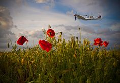 Poppies for memories -