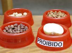 Cebola já está proibida! Veja como cuidar melhor do seu cãozinho