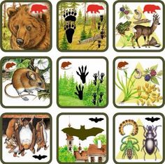 Pexetrio Plus: Savci Preschool Education, Preschool Activities, Science For Kids, Science And Nature, Animals For Kids, Animals And Pets, Printable Board Games, Montessori Practical Life, Animal Tracks