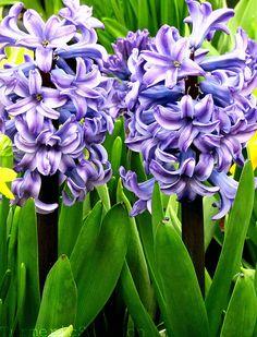 Turmeric and Saffron: Preparing For Nowruz 1390 - Persian New Year 2011!