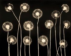 Michael C. Mendez, photogram, dandelions
