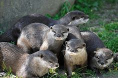 Baby otters!  Yes, I am that dorky.