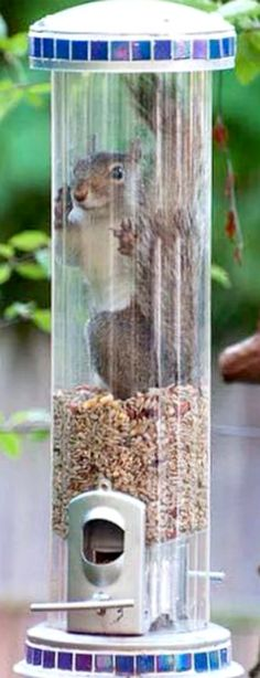 Squirrel Terrarium ❊ Hope he can get back out!!