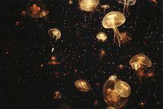 Zdjęcie Meduzy - inspirujące zdjęcia pod wodą obrazek