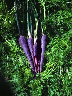 Carrots | Purple Versions Of Your Favorite Non-Purple Vegetables
