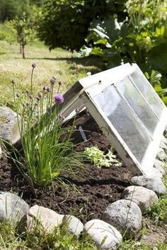 This is a good upcycle as well as a good technique for growing your own veggies when the weather may still be a bit cold -- Cold frame window. Helps you grow vegetables and plants earlier at spring. Good re-use for those old windows! Dream Garden, Garden Art, Garden Design, Garden Gates, Container Gardening, Gardening Tips, Old Windows, Barn Windows, My Secret Garden