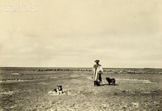 Dogs accompany a shepherd and flock in the steppe region of Hortobagy Old Photography, Rich Image, Budapest Hungary, Flocking, Royalty Free Photos, National Geographic, Photo Library, Vector Art, Stock Photos