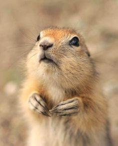 Hmmmm :) so cute :*