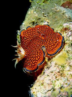 Slugs are not usually considered beautiful but take a look at this sea slug.