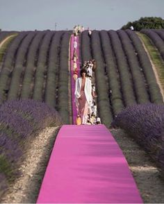 Jacquemus Men's Spring 2020 Fashion Show. See all of the looks from designer Simon Porte Jacquemus' lavendar 10 anniversary show in Provence Mens Fashion Week, Fashion Show, High Fashion, Hot Pink Blazers, Jacquemus, Foto Fashion, Lavender Fields, Lavender Roses, Rose Flowers