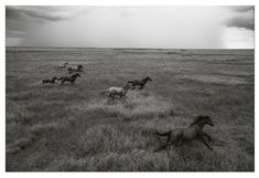 Wild Brumbies Of Australia | Nick Leary