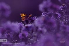 Where I'm from everything is in purple by Anastasia-Ri. Please Like http://fb.me/go4photos and Follow @go4fotos Thank You. :-)