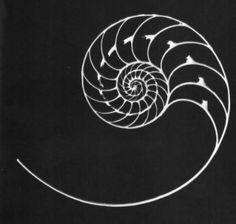 47 Ideas geometric nature tattoo nautilus shell for 2019 Fibonacci Tattoo, Fibonacci Spiral, Improve Photography, Geometric Nature, Nautilus Shell, Flash Art, Nature Tattoos, Art Sketchbook, Sacred Geometry
