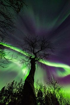 Landscape & Nature - etherealvistas: Aurora and Tree (Norway) by. Beautiful Sky, Beautiful Landscapes, Beautiful Pictures, Northen Lights, Ciel Nocturne, Natural Phenomena, Nature Scenes, Science And Nature, Amazing Nature