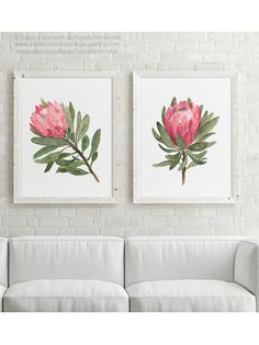 Protea Flowering Plant Art Print Pink Flower Green Leaves set 2 Paintings Minimalist Wall Decoration Canvas Illustration two Flowers Poster Protea Art, Protea Flower, Cactus Flower, Canvas Wall Decor, Wall Art Decor, Watercolor Flowers, Watercolor Art, Indoor Flowering Plants, Pink Flowers