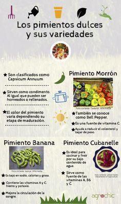 Variedades de pimiento dulce, usos y beneficios. Creada por Mariana I. Rosado Meléndez para Agrochic.com