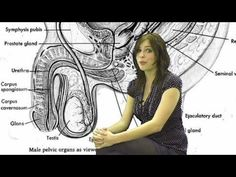 ▶ STDs, Sexually Transmitted Disease 1, Gonorrhea Symptoms Hot Facts Girl Kayleigh - YouTube
