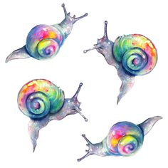 Rainow Snails