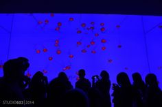 Mesmerized Ripleys Aquarium Toronto, Ripley Aquarium, Jellyfish, Ontario, Canada, Concert, Photography, Medusa, Photograph