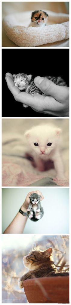 Tiny kitties!