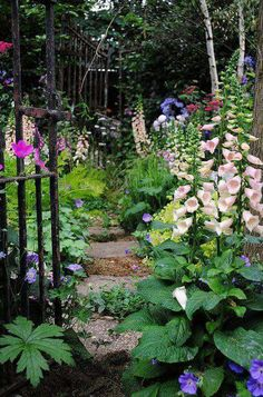 Awesome Stepped Path between the Foxgloves in a County Garden