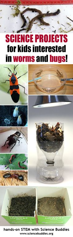 Bug, worm, and flying insect #science for K-12 students. [Science Buddies: http://www.sciencebuddies.org/blog/2016/07/bug-and-insect-stem-roundup.php?from=Pinterest] #STEM #summerscience