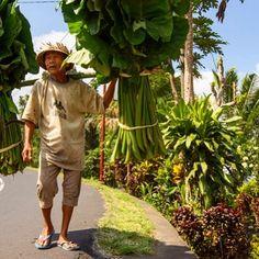 Bali Bali, Instagram, The World