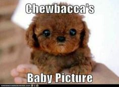 Like who thinks this is Chewbacca's baby???... right???