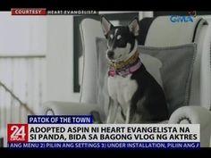 24 Oras: Heart's cute pet aspin Pan-pan creates her own vlog -