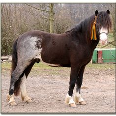 roaned patch - is this a somatic mutation or connected to a specific pinto pattern? Most Beautiful Animals, Beautiful Horses, Rare Horse Colors, Somatic Mutation, Horse Markings, Rare Horses, Bay Horse, Icelandic Horse, All The Pretty Horses