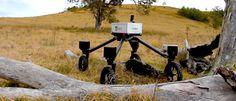 SwagBot:+O+Robot+Cowboy+que+pastoreia+gado