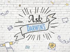 Ask Darwin's - How do I stop the scratching, rashes, chewing and smelly yeast? - Darwin's Natural Pet Products