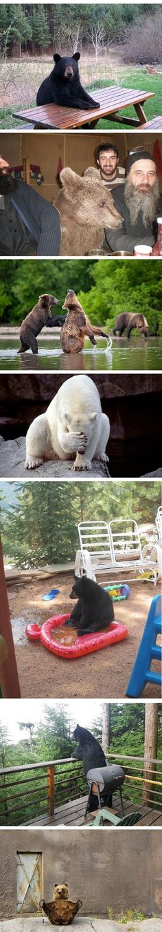 bears doing human things (more on link)