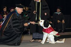 """Niko earned his """"dogtorate"""" degree at OU-Tulsa's official graduation ceremony May 9."""