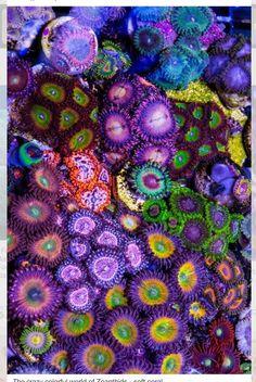 Que locura de colorido!........coralitos