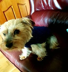 Check out this item in my Etsy shop https://www.etsy.com/uk/listing/450054730/small-navy-blue-dog-coat-with-sparkle