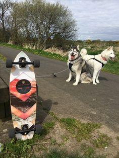 River cruising on the  #arborrally #skaterdog #skatedogs #dogsthatskate #huskies #huskita #huskiesofinstagram #paristrucks #bloodorangewheels #unclefunkys #arborskateboards #skateboard #skate #skatelife #longboard #longboarding #thegnardaily #northernireland