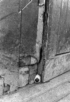 Jill Freedman, Nosy Barker, Ireland, 1974 by drollgirl, via Flickr