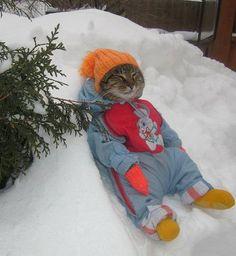 This Cat Is Definitely Enjoying Winter